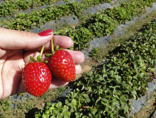 Quinta Seis Marias: o mundo da agricultura biológica no Algarve 2