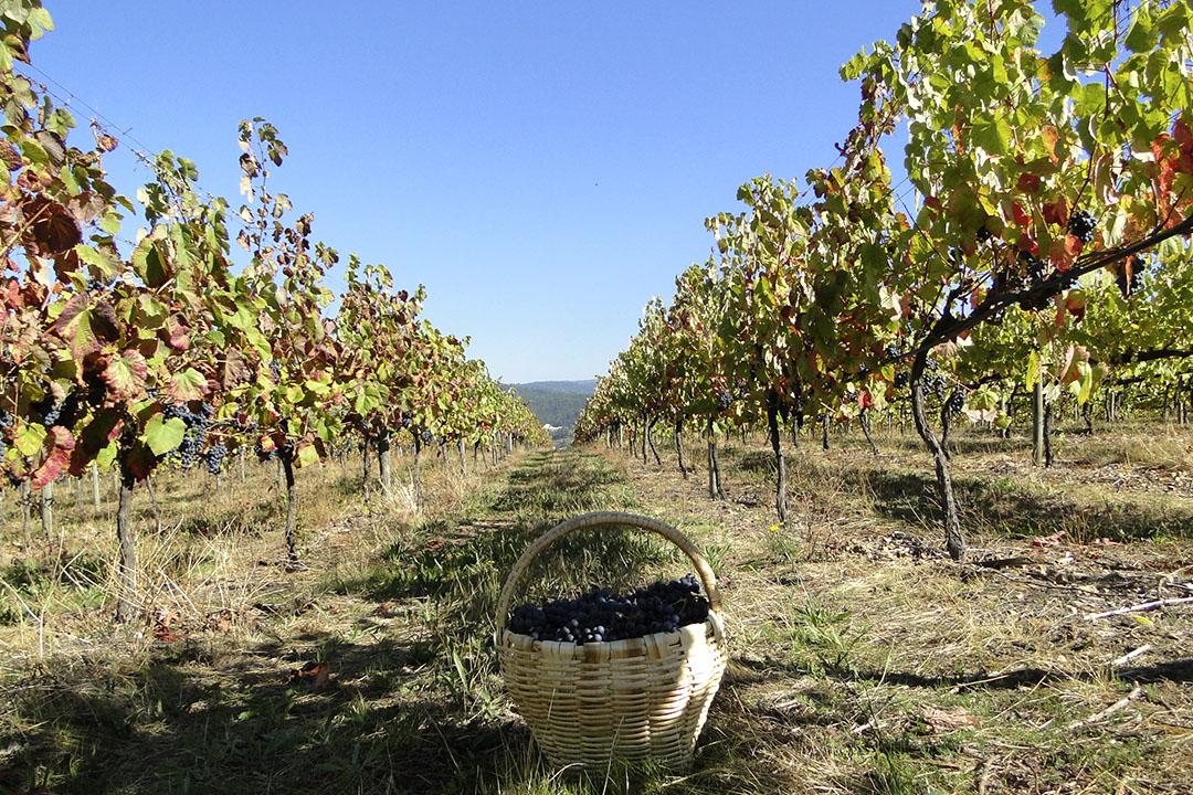 MONVERDE WINE EXPERIENCE HOTEL: experiências em volta do vinho verde 1