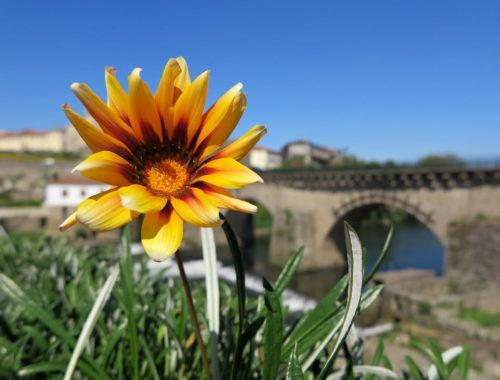 barcelos-ponte-medieval