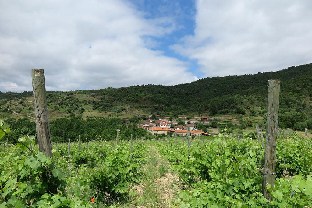 casa-grande-seixo-vinhas