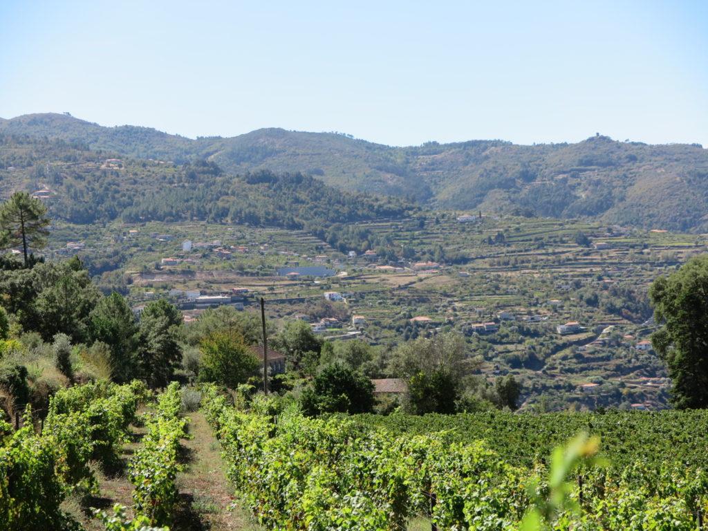 Quinta de Covela: paisagem
